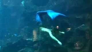 一瞬見たときは人間だと思わず本物の人魚姫だと思ってしまいました^^;