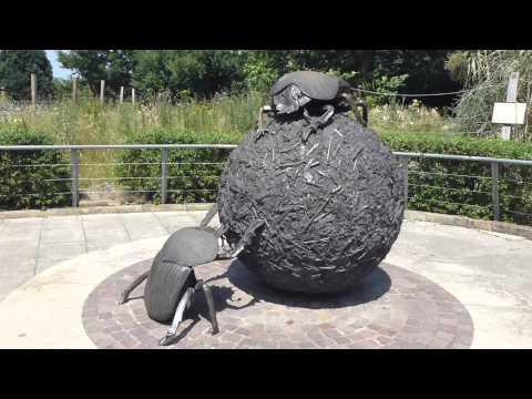 Dung Beetles statue - London Zoo - Bjalla - Bjöllur - Stytta af bjöllu  - Dýragarður
