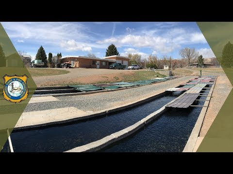 Trout Hatchery Tour - Tillett Springs Rearing Station