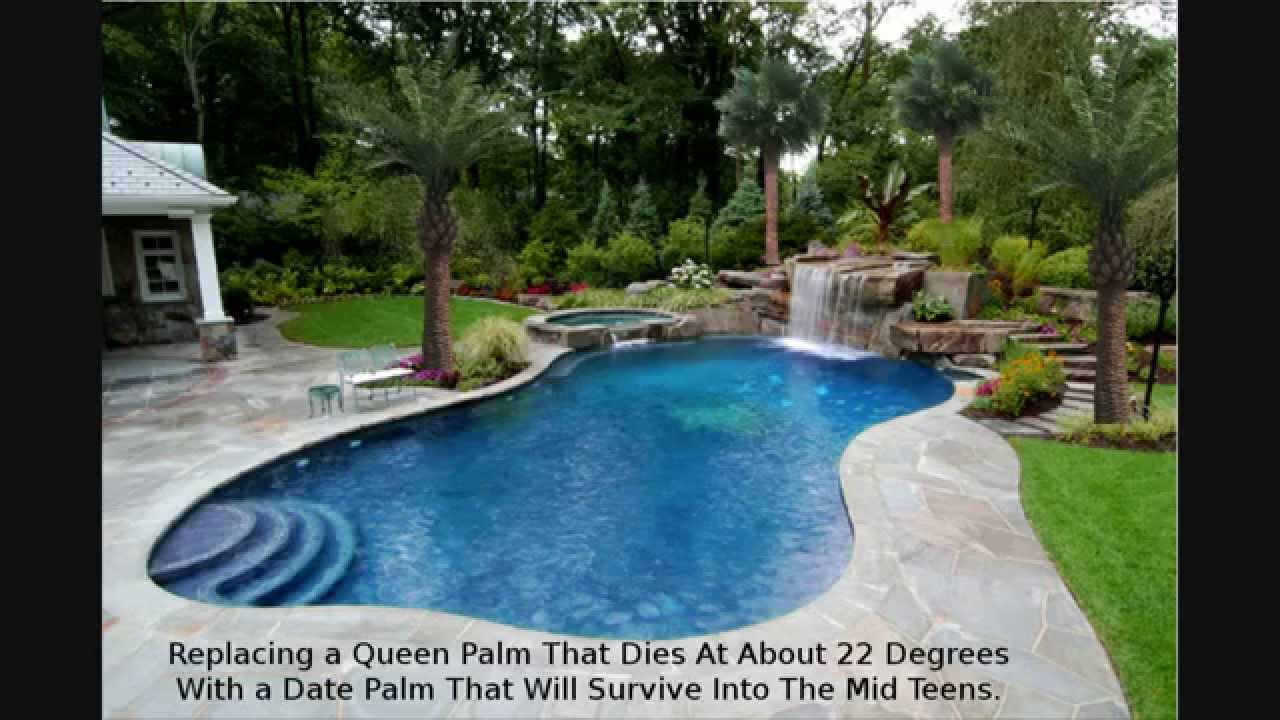 palm tree landscaping design houston