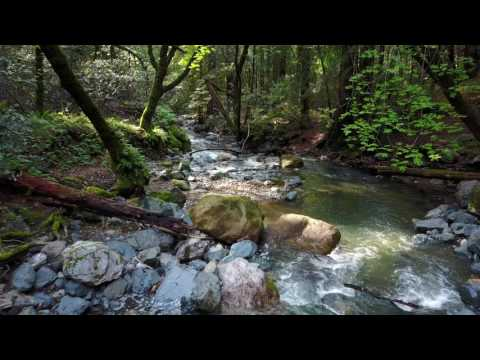 Forrest frequency / 2k res / Binaural Beats / 832hz / Negative Energy Wipe Out / Visual Therapy