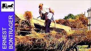 Amish Threshing Oats and Baling Straw