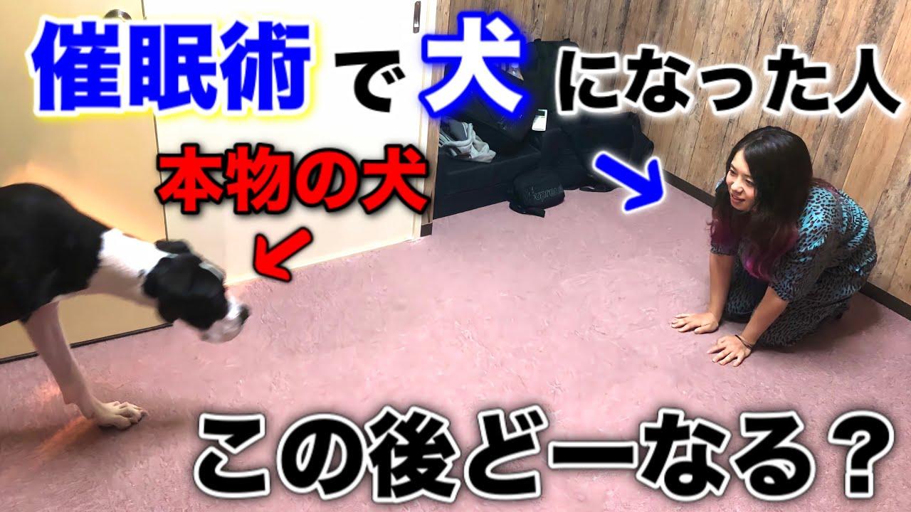 【衝撃】この後、犬がとった驚きの行動とは!?催眠術で犬になった人間は、どーなる!?@あにまるず Animals 【あつ森】