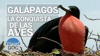 Galapagos. La Conquista de las Aves   Naturaleza - Planet Doc