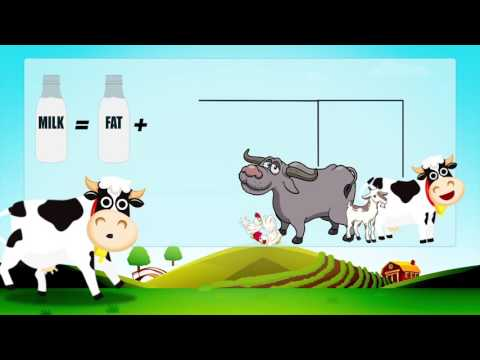 Cattle Feed Concentrate Plus- Hindi