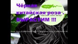 Чёрная китайская роза !!! .Посылки с семенами из АлиЭкспресс.Выращиваем розы ,бамбук и сакуру.