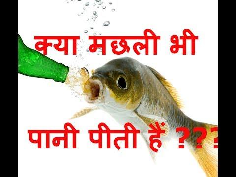 Do Fish Drink Water? (HINDI/URDU) -