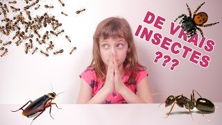 [JOUET] On dirait de vrais insectes ! Ou presque... - Studio Bubble Tea unboxing Hexabug stuff