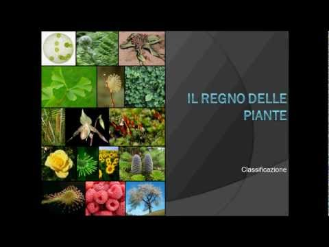 Geo&Geo: Daniele Zanzi, le radici degli alberi e la mes ...