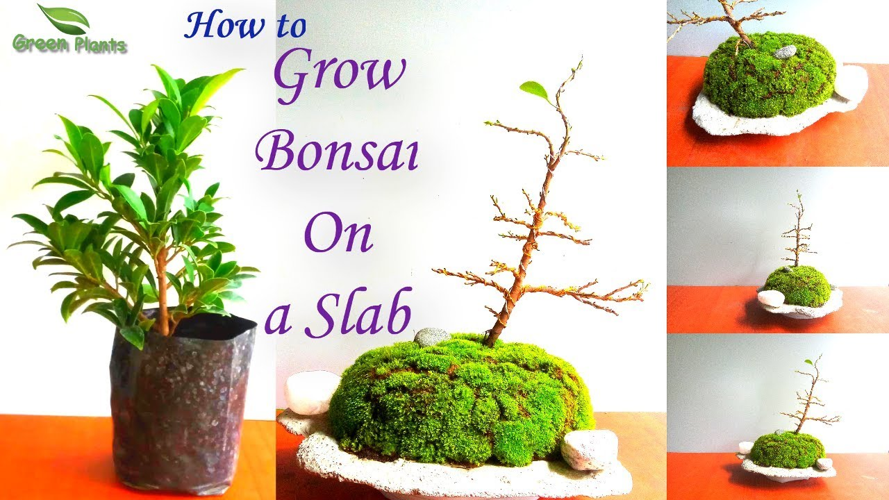 Bonsai Slab Planting Bonsai Trees For Beginners Green Plants Youtube