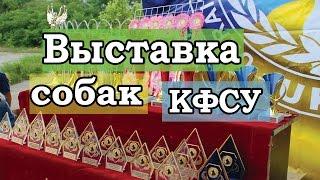 Выставка собак Кинолого-фелинологического союза Украины г. Херсон
