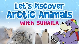 Let's Discover Arctic Animals with Zaky & Suhaila