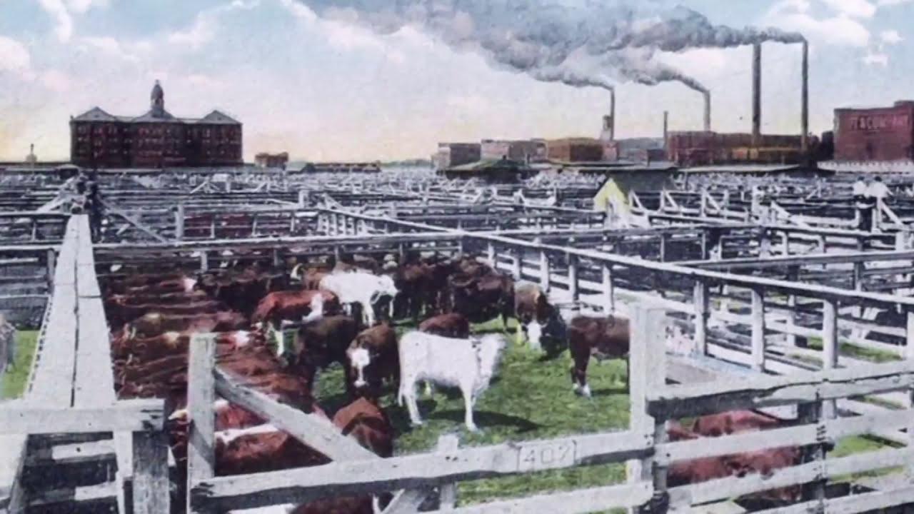 I Am Angus Saint Joseph Stockyards And Livestock Exchange