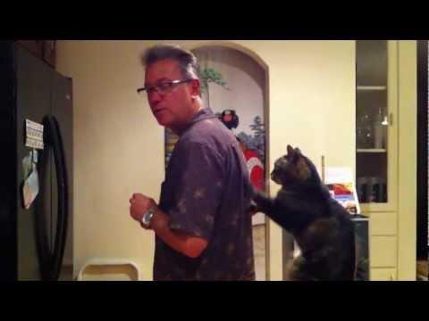 Cat Gives Man Back Rub