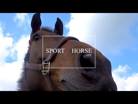 SPORT HORSE LIFE - Filming in Wellington This Season
