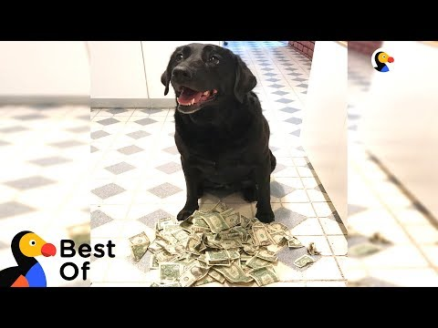 Independent Dogs That Don't Need Hoomans | The Dodo Best Of