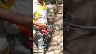 தென்னை மரம் ஏறுபவர்| தென்னை மரம் ஏறும் கருவி கிடைக்கும் | கோயம்புத்தூர் | 8110095986.