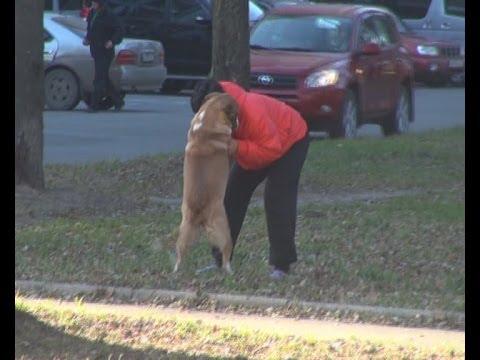 Собаке помогли найти