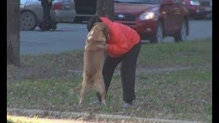 Собаке помогли найти хозяйку
