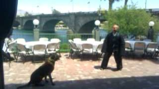 Havasu K9 Unit Demo
