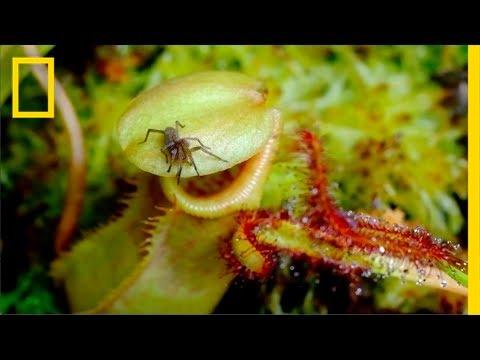 Eerie Time-Lapse of Bug-Eating Plants | Short Film Showcase