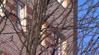 Вырубка деревьев(, 2013-02-27T18:28:53.000Z)