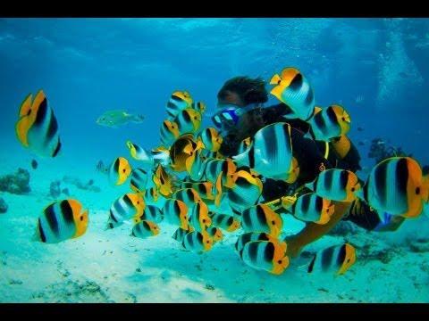 Imagens do fundo do mar em hd images of the sea in hd - Imagens em hd de animes ...
