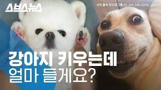 강아지 키우는 데 드는 비용 얼마? 입양 전 알아야 할 것들 짚어보기 / 스브스뉴스