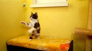 Екатеринбург Гостиница для животных ЗаМУРчательные кошки