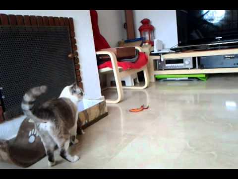 video-2012-01-24-10-57-42.mp4