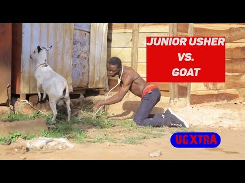 JUNIOR USHER VS GOAT  New Ugandan Comedy 2019 HD Mp3