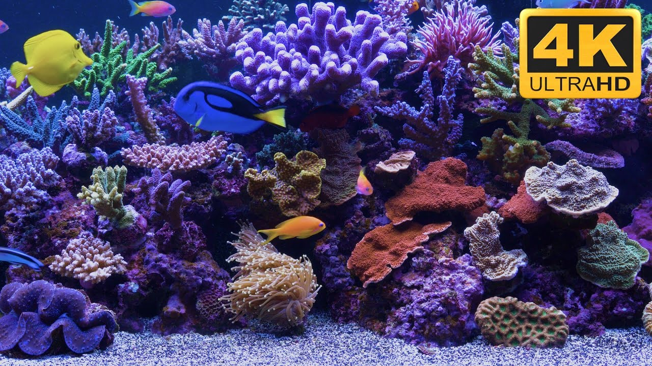 Unbelievable resolution aquarium video with dory and nemo for Aquarium video