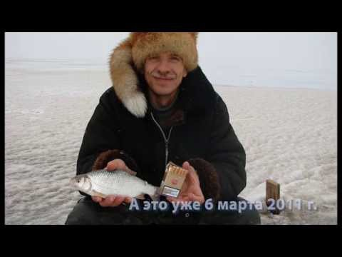 Весенняя Цимла 2010 г