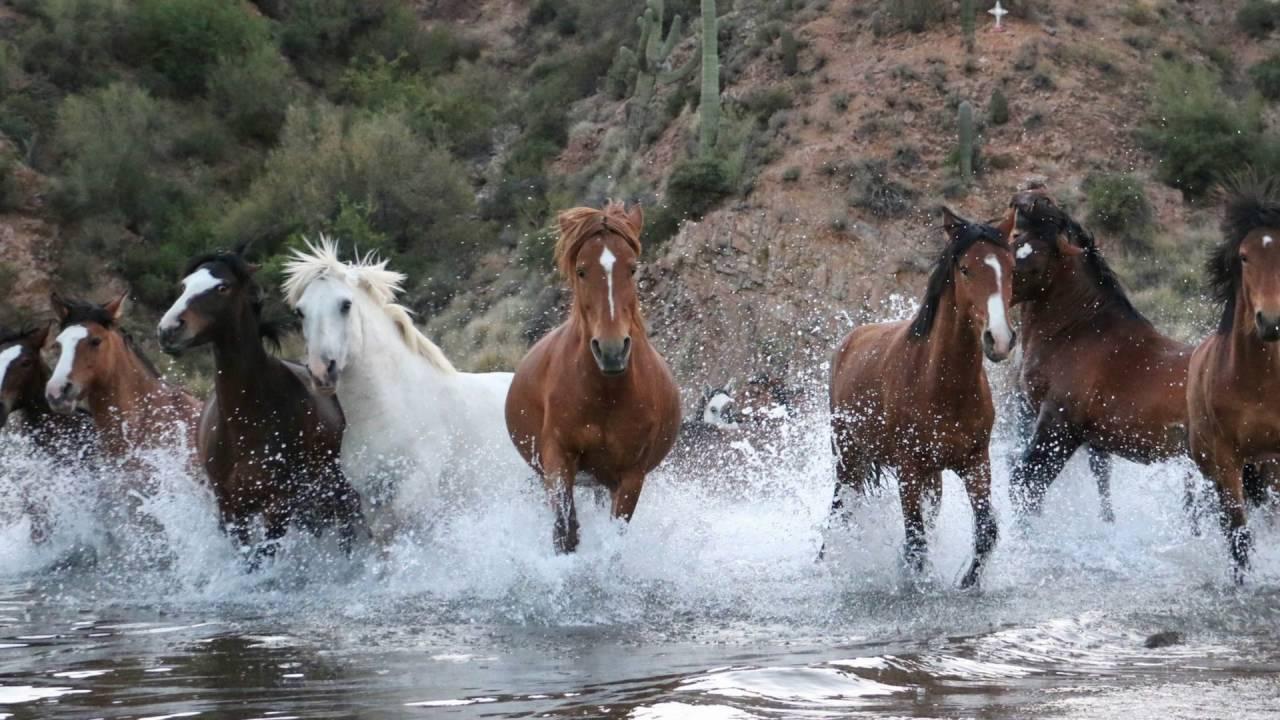Horses A-Z