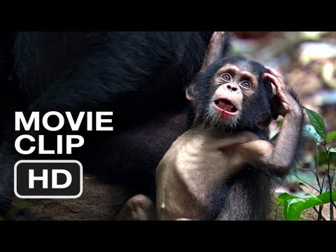 Chimpanzee Movie CLIP #1 (2012) - Meet Oscar's Extended Family - Disney Move HD