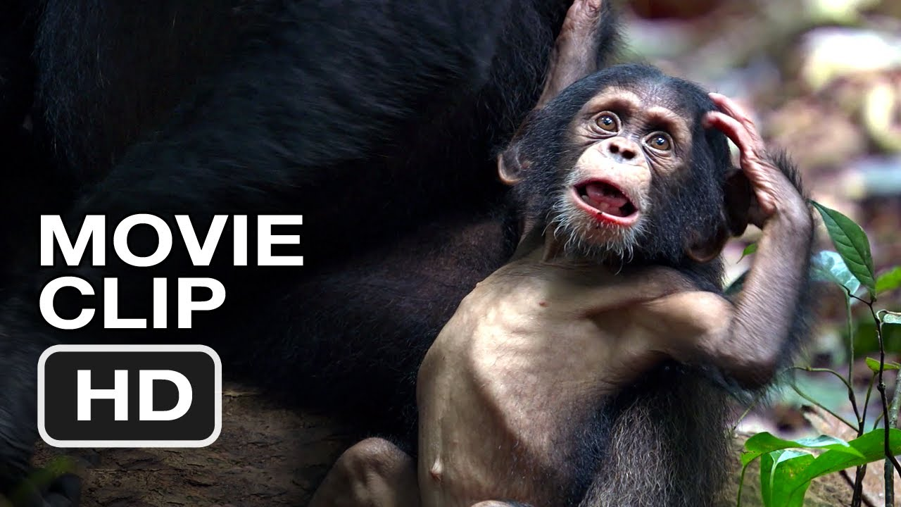 chimpanzee movie clip 1 2012 meet oscars extended