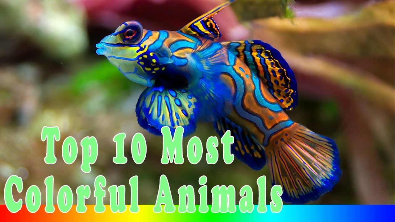 top 10 most colorful animals in the world youtube
