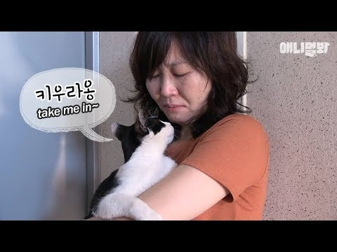 A stalker cat begging him to be her owner?!
