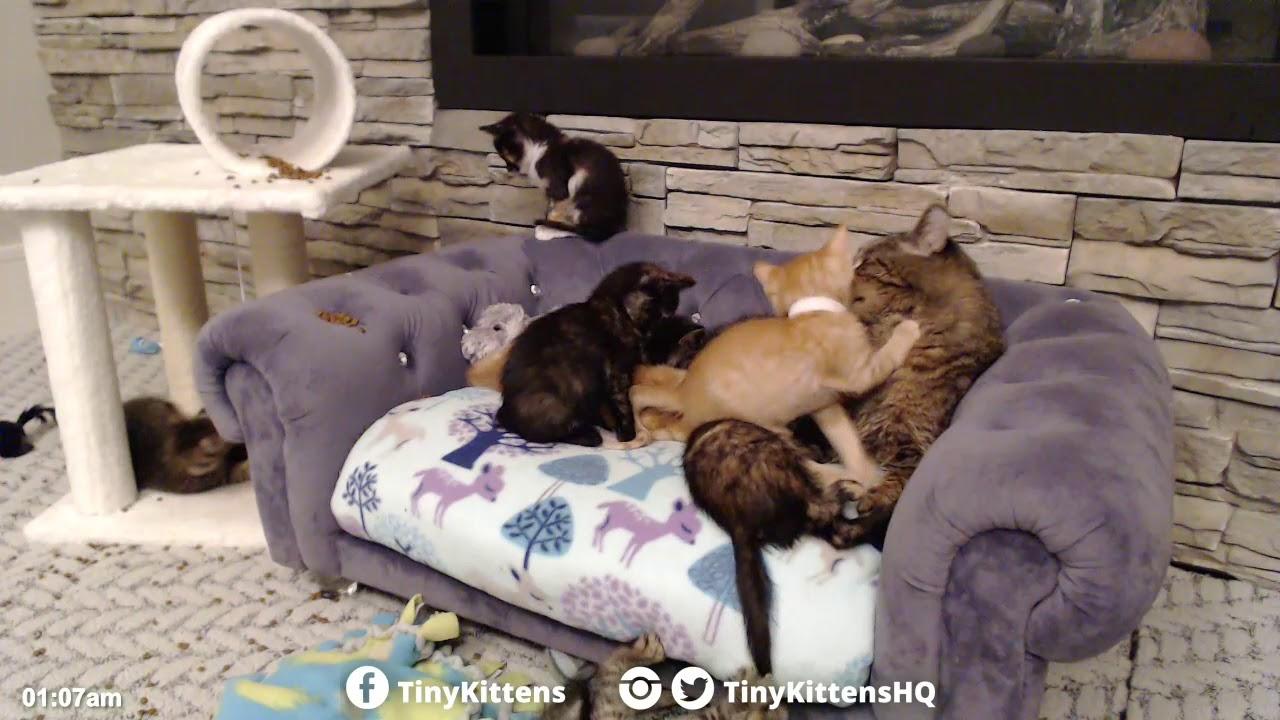 Grandpa Mason loves his new kittens!  TinyKittens.com