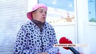 В Ярославль прибыли цветы с опасным паразитом: бархатцы пришлось сжечь