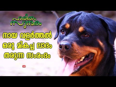 Make Huge profit out of Pet Dogs rearing | Haritham Sundharam | EP 204