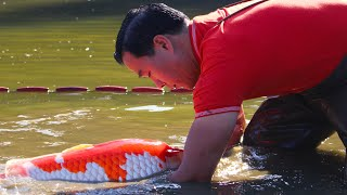How is it like to buy Koi in Japan for your fish pond?