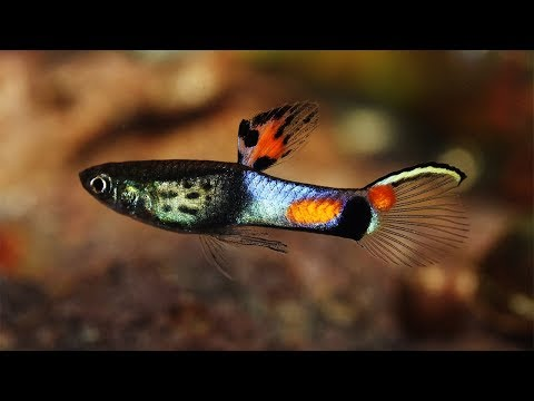 Top 13 Best Freshwater Fish For Your Home Aquarium - You Will Love Em.