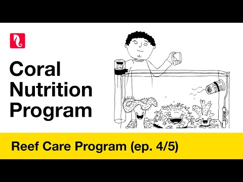 Red Sea Reef Care - Coral Nutrition Program (episode 4/5) HD