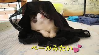 猫の忍法🐈【可愛い・面白い】#129