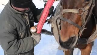 Как запрячь лошадь