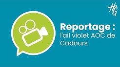 Reportage : l'ail violet AOC de Cadours