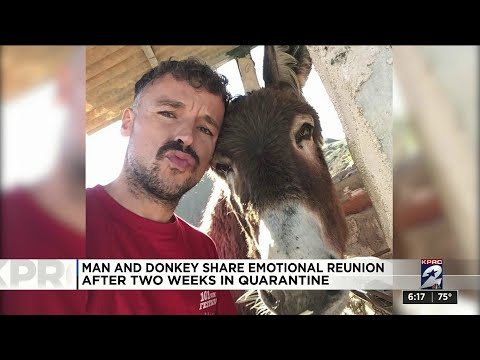 One Good Thing: Man and donkey share emotional reunion after 2 weeks in quarantine