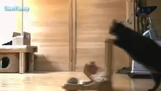 Кот уборщик 2 Cat cleaner 2 Юмор! Прикол! Смех