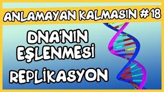 Anlamayan Kalmasın 18 DNA nın Eşlenmesi ( Replikasyon)